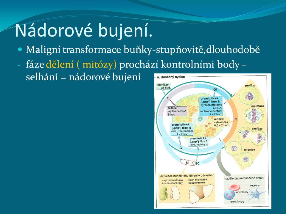 Nádorové bujení. Maligní transformace buňky-stupňovitě,dlouhodobě - fáze dělení ( mitózy) prochází kontrolními body – selhání = nádorové bujení