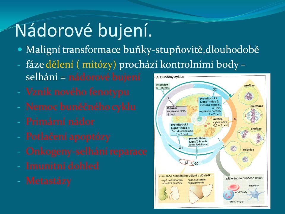 Nádorové bujení. Maligní transformace buňky-stupňovitě,dlouhodobě - fáze dělení ( mitózy) prochází kontrolními body – selhání = nádorové bujení - Vzni