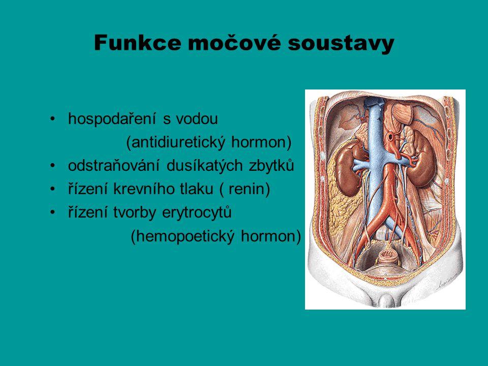 Pars prostatica urethrae Vstup ductus ejaculatorius do prostatické části urethry