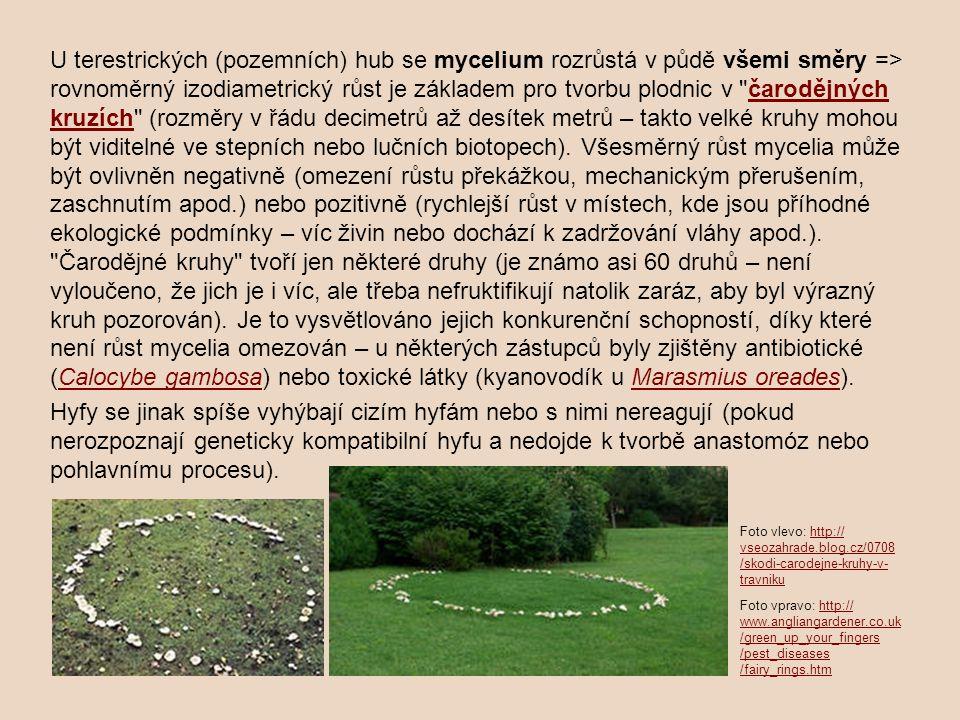 U terestrických (pozemních) hub se mycelium rozrůstá v půdě všemi směry => rovnoměrný izodiametrický růst je základem pro tvorbu plodnic v
