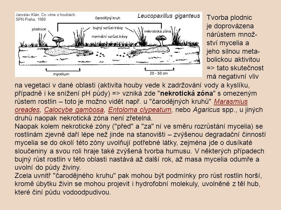 na vegetaci v dané oblasti (aktivita houby vede k zadržování vody a kyslíku, případně i ke snížení pH půdy) => vzniká zde