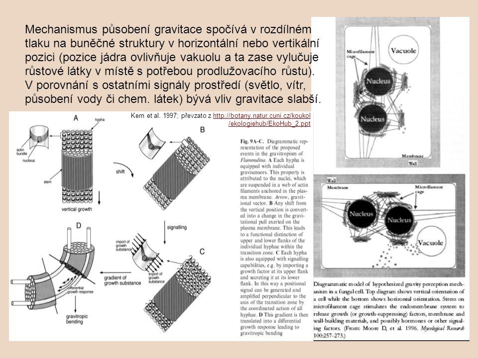 Mechanismus působení gravitace spočívá v rozdílném tlaku na buněčné struktury v horizontální nebo vertikální pozici (pozice jádra ovlivňuje vakuolu a