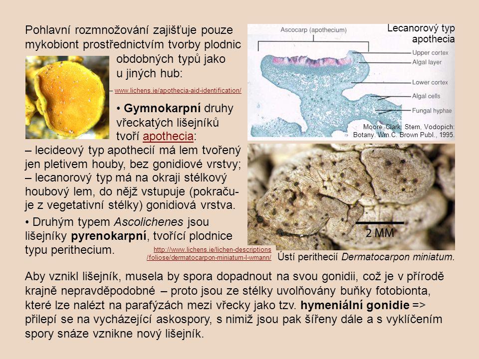 Pohlavní rozmnožování zajišťuje pouze mykobiont prostřednictvím tvorby plodnic obdobných typů jako u jiných hub: Gymnokarpní druhy vřeckatých lišejník