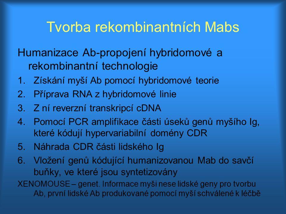 Tvorba rekombinantních Mabs Humanizace Ab-propojení hybridomové a rekombinantní technologie 1.Získání myší Ab pomocí hybridomové teorie 2.Příprava RNA
