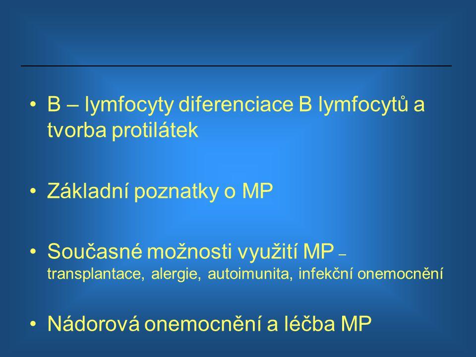 B – lymfocyty diferenciace B lymfocytů a tvorba protilátek Základní poznatky o MP Současné možnosti využití MP – transplantace, alergie, autoimunita,