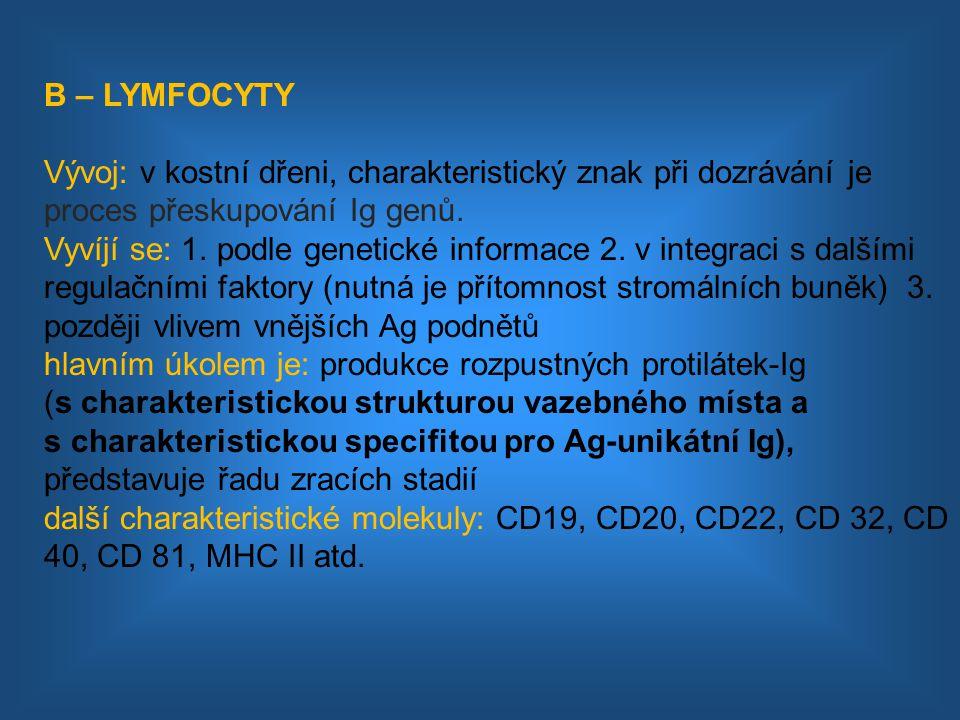 Rozlišujeme: 1.nezralé membránový IgM 2.