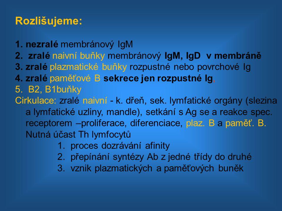 Rozlišujeme: 1.nezralé membránový IgM 2. zralé naivní buňky membránový IgM, IgD v membráně 3.zralé plazmatické buňky rozpustné nebo povrchové Ig 4.zra