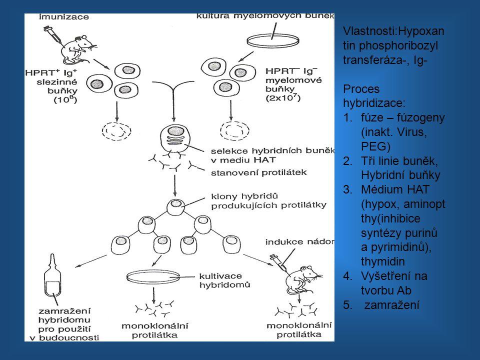 Vlastnosti:Hypoxan tin phosphoribozyl transferáza-, Ig- Proces hybridizace: 1.fúze – fúzogeny (inakt. Virus, PEG) 2.Tři linie buněk, Hybridní buňky 3.