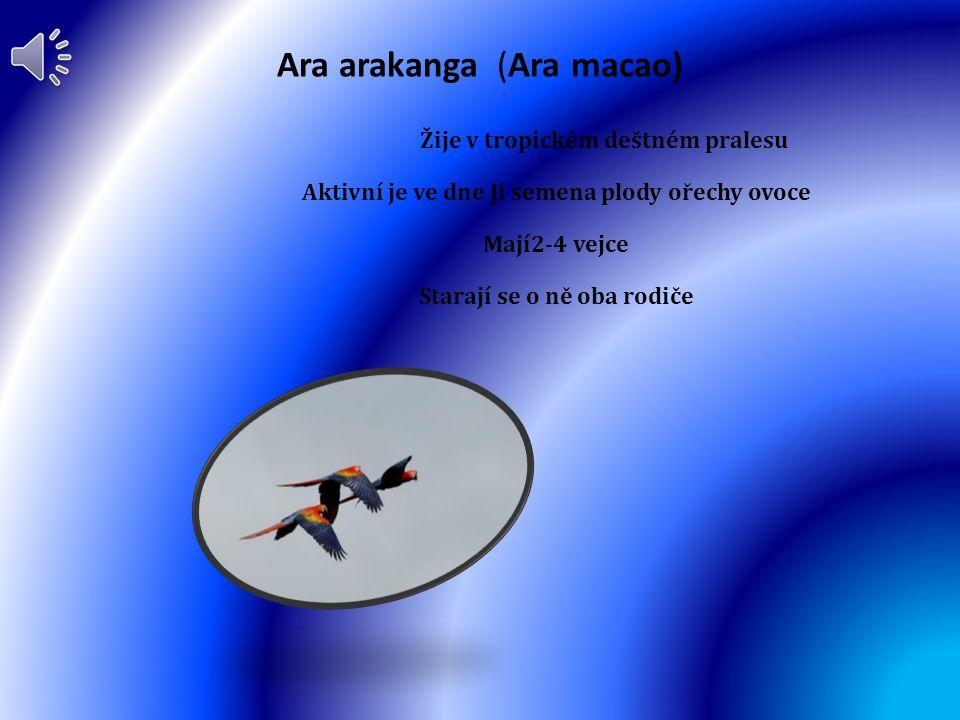 Káně lesní (Buteo buteo) Žije po Evropě kromě Islandu Aktivní je ve dne Je to dravec Mají 2-3 vajíčka Stará se o něj samička mláďata