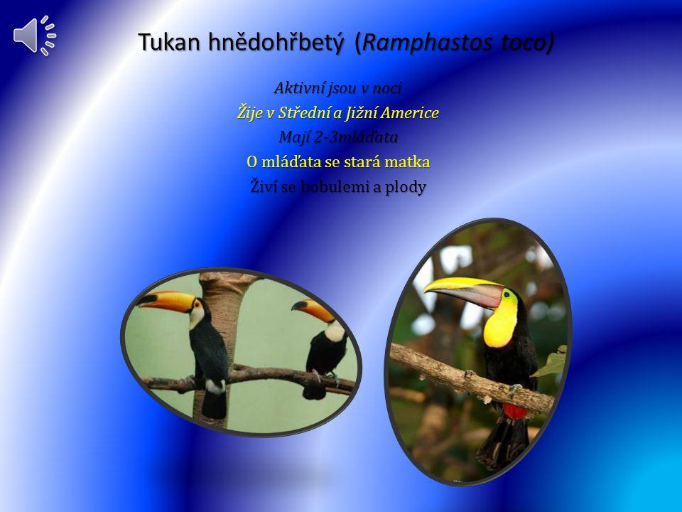 Lesňáček žlutý(Dendroica petechia) Žije v rozmezí Aljašky až po Mexiko Aktivní je ve dne Živí se plody a housenkami Mají3-6 vajec O mláďata se starají