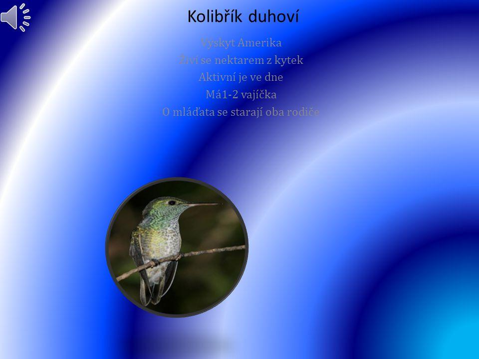 Kvesal chocholatý (Pharomachrus mocinno) Vyskytuje se v Jižní Americe Živí se ovocem a plody Mají asi 2 Vejce O mláďata se stará samička a sameček