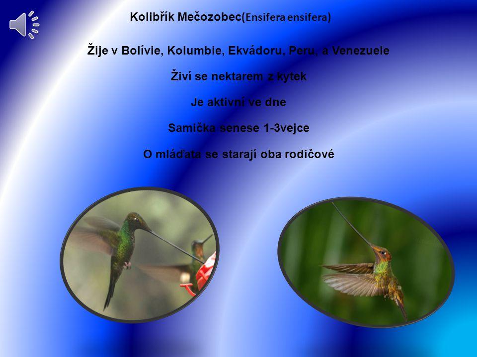 Kolibřík duhoví Výskyt Amerika Živí se nektarem z kytek Aktivní je ve dne Má1-2 vajíčka O mláďata se starají oba rodiče