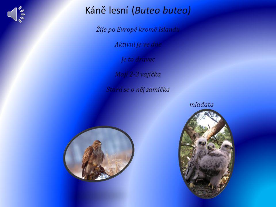 Arassari smaragdový (Aulacorhynchus prasinus) Žije v Mexiku a Nykaraguy po Venezuele, Kolumbii, Ekvádoru a Peru. Je aktivní ve dne Arassari je všežrav