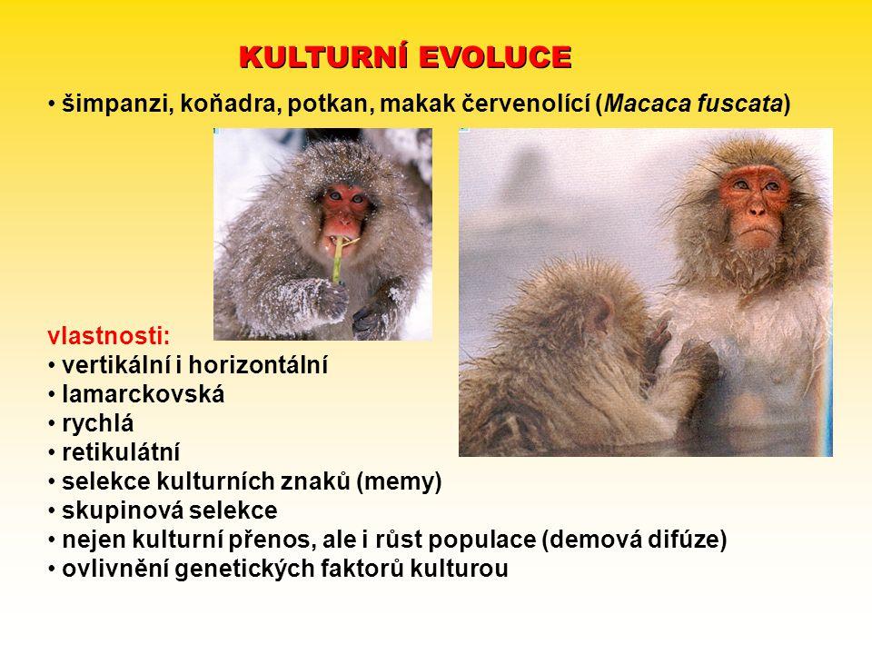 KULTURNÍ EVOLUCE šimpanzi, koňadra, potkan, makak červenolící (Macaca fuscata) vlastnosti: vertikální i horizontální lamarckovská rychlá retikulátní s