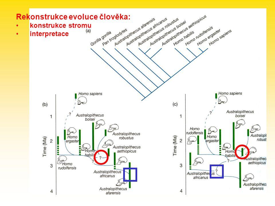 Rekonstrukce evoluce člověka: konstrukce stromu interpretace