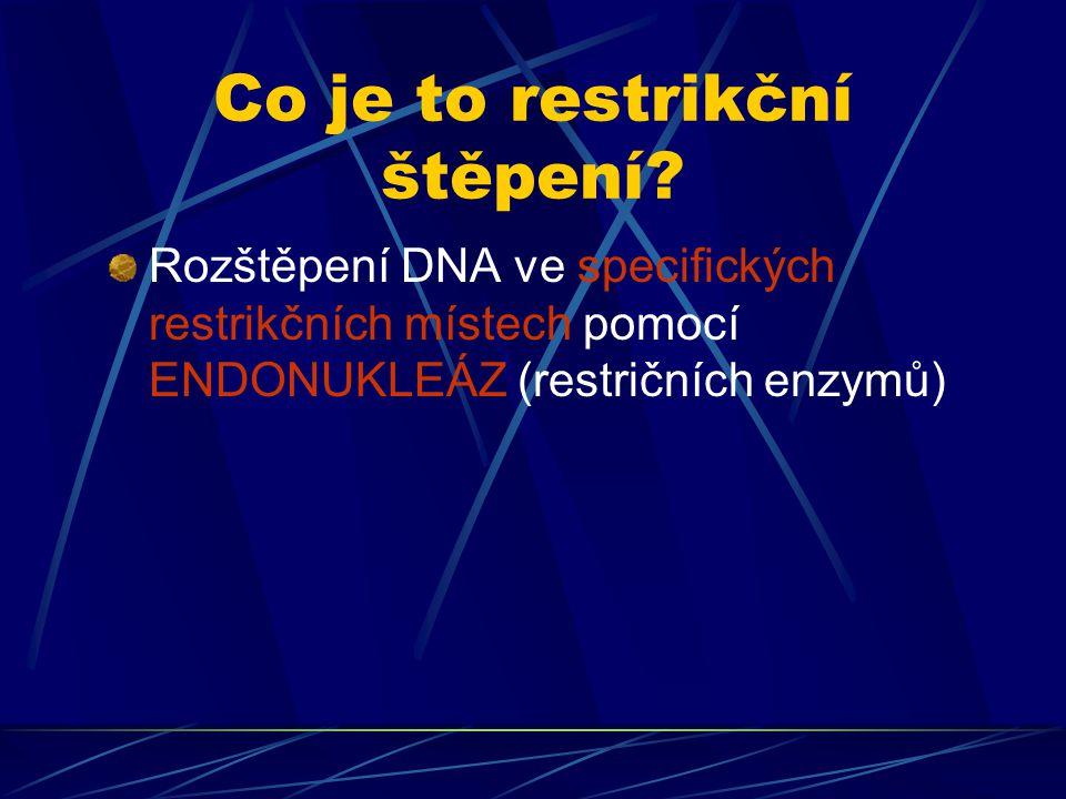 Restrikční endonukleázy Jsou enzymy bakteriálního původu Endonukleáza je enzym štěpící nukleovou kyselinu uvnitř řetězce na více kratších fragmentů Restrikční endonukleáza neštěpí DNA kdekoliv, ale rozpoznává specifickou dvouřetězcovou sekvenci bazí v molekule DNA Většina restrikčních enzymů má rozpoznávací místa, která se skládají ze čtyř nebo šesti párů bazí Při změně jediné báze dojde ke zrušení cílového místa a DNA zde tedy nebude štěpena Restrikčních endonukleáz je známo několik tisíc