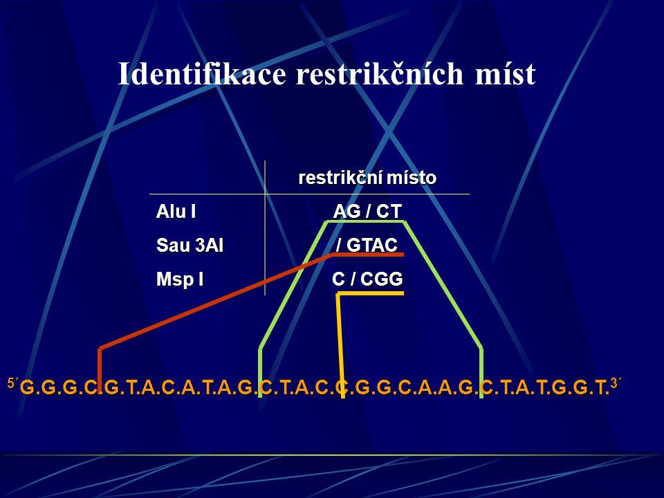 restrikční místo Alu I AG / CT Sau 3AI / GTAC Msp I C / CGG 5´ G.G.G.C.G.T.A.C.A.T.A.G.C.T.A.C.C.G.G.C.A.A.G.C.T.A.T.G.G.T.