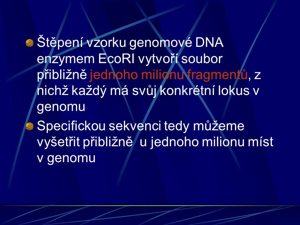 Štěpení vzorku genomové DNA enzymem EcoRI vytvoří soubor přibližně jednoho milionu fragmentů, z nichž každý má svůj konkrétní lokus v genomu Specifickou sekvenci tedy můžeme vyšetřit přibližně u jednoho milionu míst v genomu