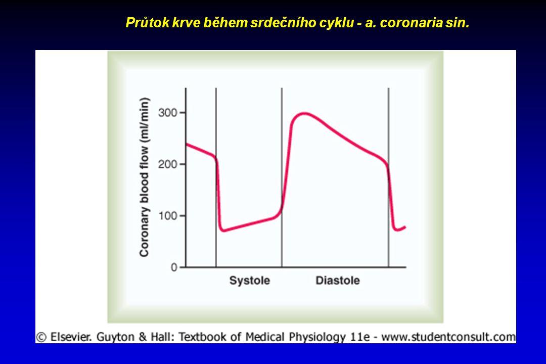 Průtok krve během srdečního cyklu - a. coronaria sin.