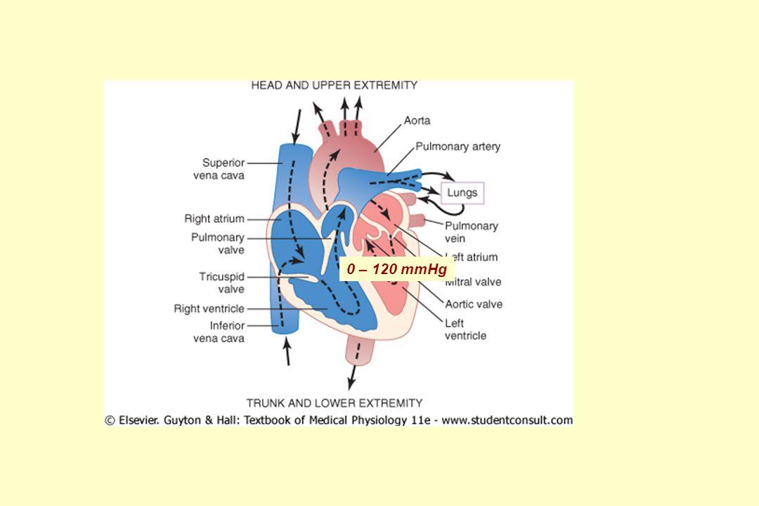 Srdeční cyklus