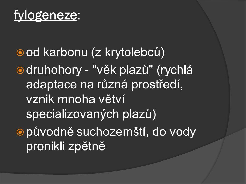 fylogeneze:  od karbonu (z krytolebců)  druhohory - věk plazů (rychlá adaptace na různá prostředí, vznik mnoha větví specializovaných plazů)  původně suchozemští, do vody pronikli zpětně
