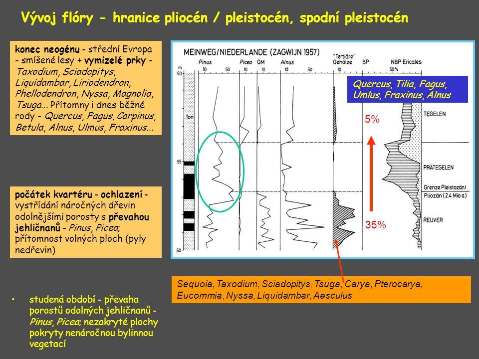 Vývoj flóry - hranice pliocén / pleistocén, spodní pleistocén studená období - převaha porostů odolných jehličnanů - Pinus, Picea; nezakryté plochy po