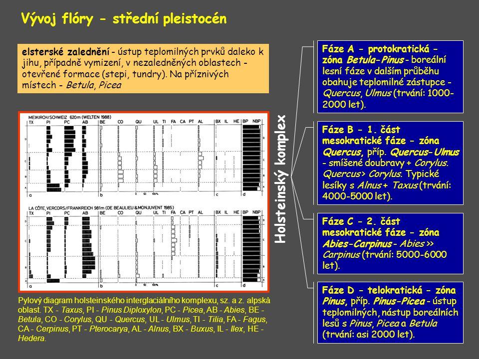 Vývoj flóry - střední pleistocén Holsteinský komplex Pylový diagram holsteinského interglaciálního komplexu, sz. a z. alpská oblast. TX - Taxus, PI -