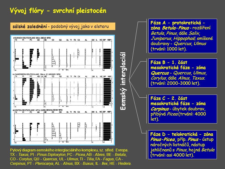 Vývoj flóry - svrchní pleistocén Eemský interglaciál Fáze A - protokratická - zóna Betula-Pinus - rozšíření Betula, Pinus, dále Salix, Juniperus, Hipp