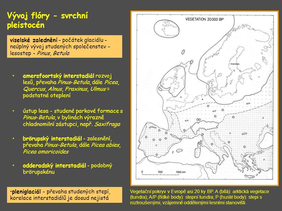 Vývoj flóry - svrchní pleistocén Vegetační pokryv v Evropě asi 20 ky BP. A (bílá): arktická vegetace (tundra); A/P (řídké body): stepní tundra; P (hus