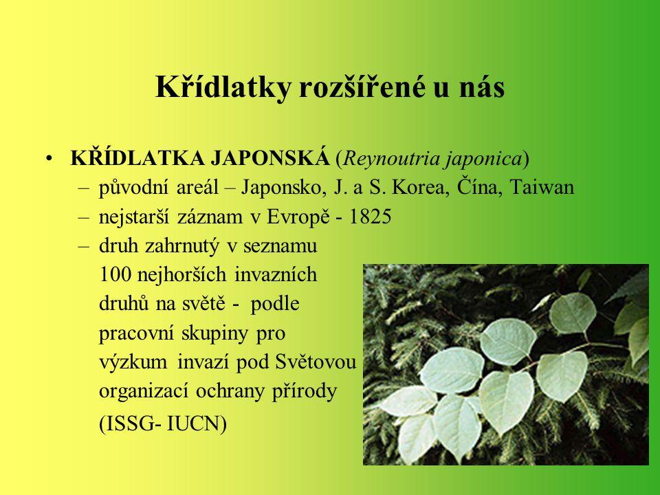 Křídlatky rozšířené u nás KŘÍDLATKA JAPONSKÁ (Reynoutria japonica) –původní areál – Japonsko, J. a S. Korea, Čína, Taiwan –nejstarší záznam v Evropě -