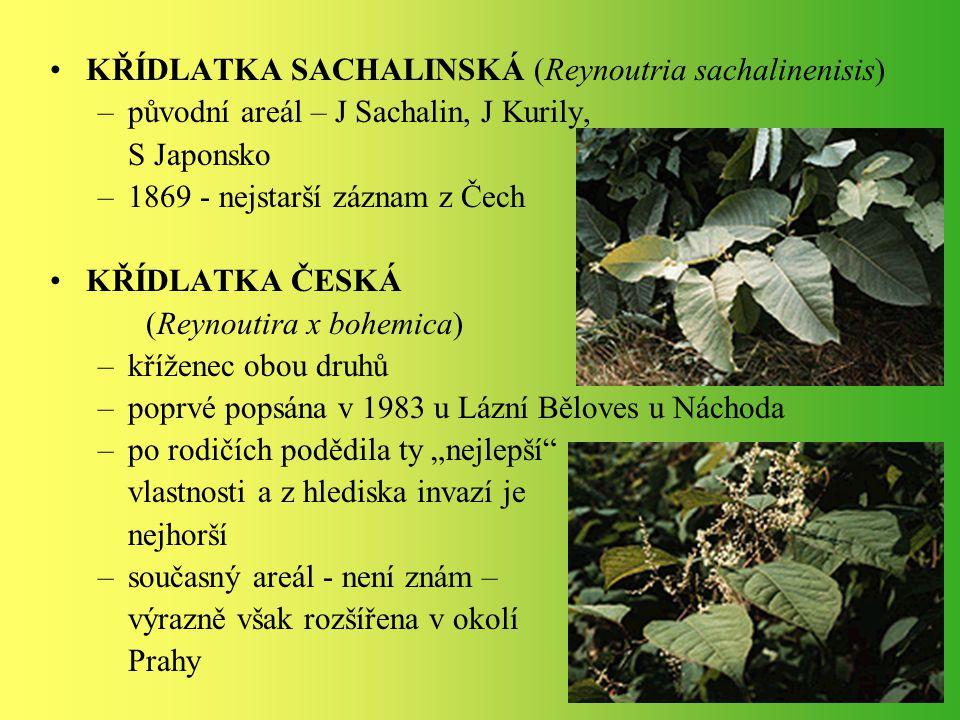 KŘÍDLATKA SACHALINSKÁ (Reynoutria sachalinenisis) –původní areál – J Sachalin, J Kurily, S Japonsko –1869 - nejstarší záznam z Čech KŘÍDLATKA ČESKÁ (R
