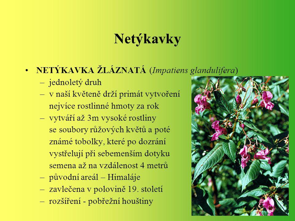 NETÝKAVKA ŽLÁZNATÁ (Impatiens glandulifera) –jednoletý druh –v naší květeně drží primát vytvoření nejvíce rostlinné hmoty za rok –vytváří až 3m vysoké