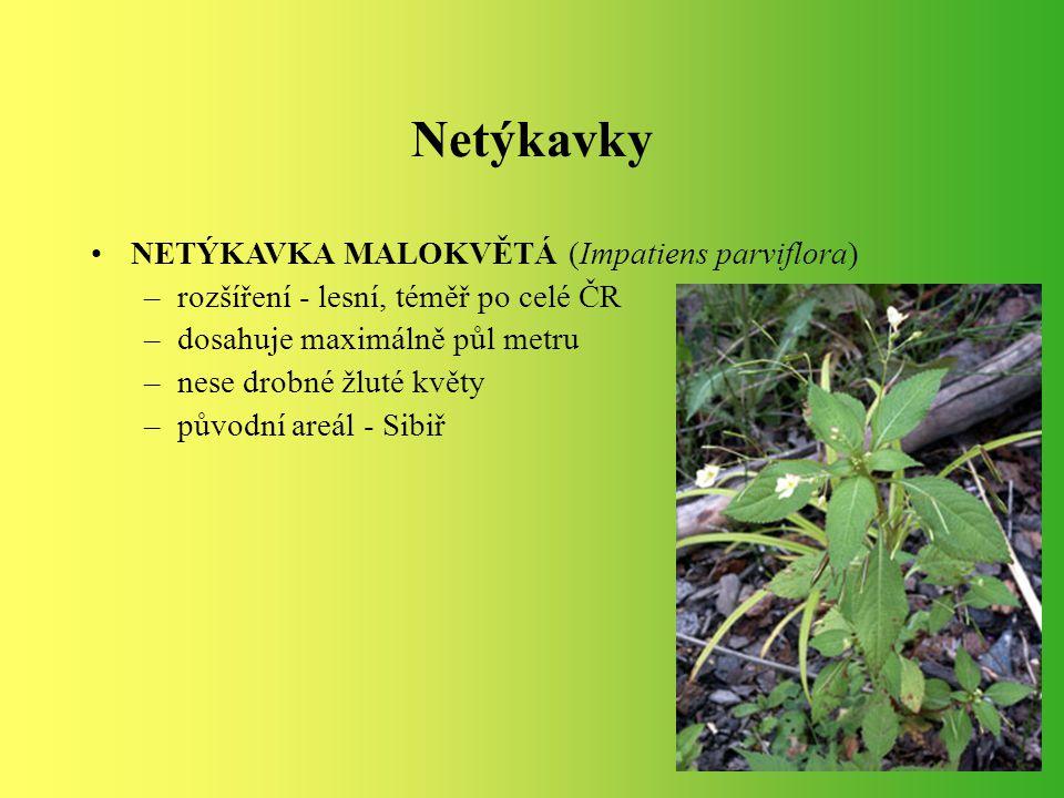 NETÝKAVKA MALOKVĚTÁ (Impatiens parviflora) –rozšíření - lesní, téměř po celé ČR –dosahuje maximálně půl metru –nese drobné žluté květy –původní areál