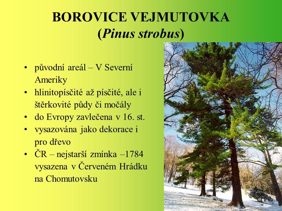 BOROVICE VEJMUTOVKA (Pinus strobus) původní areál – V Severní Ameriky hlinitopísčité až písčité, ale i štěrkovité půdy či močály do Evropy zavlečena v