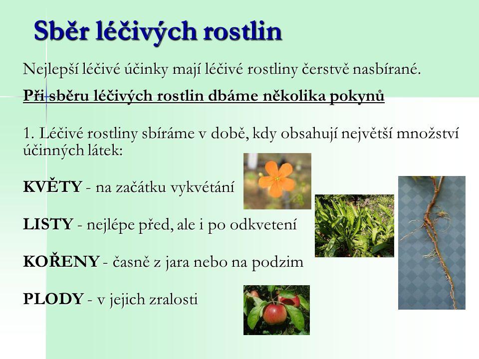 Nejlepší léčivé účinky mají léčivé rostliny čerstvě nasbírané. Při sběru léčivých rostlin dbáme několika pokynů 1. Léčivé rostliny sbíráme v době, kdy