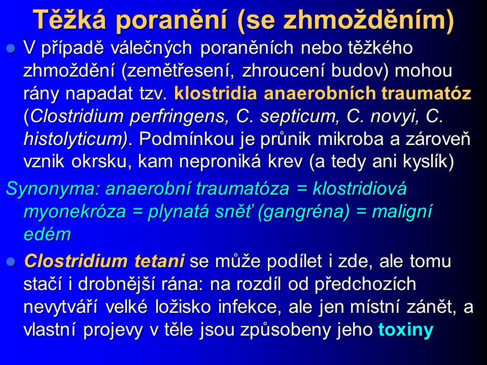 Plynatá sněť http://pharmacie.univ- lille2.fr/recherche/labos/ Bacteriologie/photos/ind ex.php?album=7