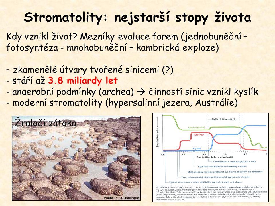 Stromatolity: nejstarší stopy života Kdy vznikl život? Mezníky evoluce forem (jednobuněční – fotosyntéza - mnohobuněční – kambrická exploze) – zkameně