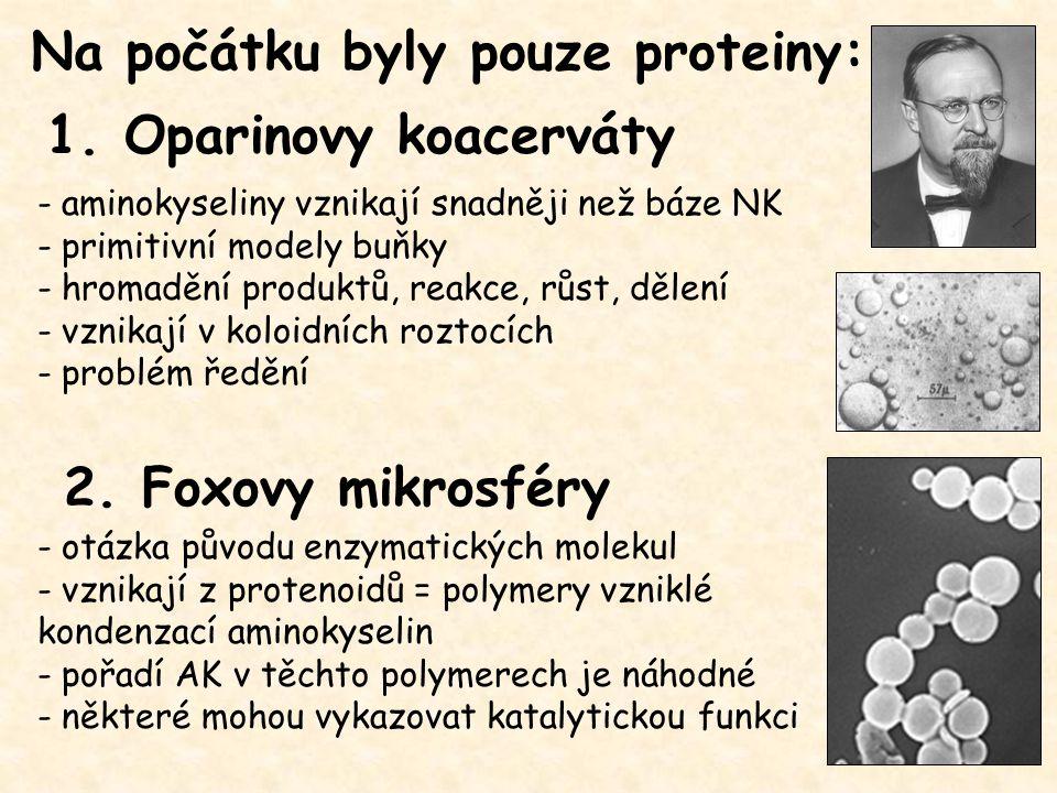 Na počátku byly pouze proteiny: - aminokyseliny vznikají snadněji než báze NK - primitivní modely buňky - hromadění produktů, reakce, růst, dělení - v
