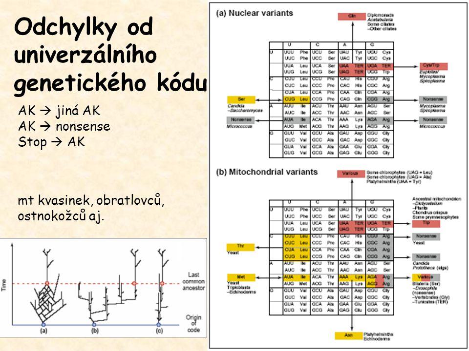 AK  jiná AK AK  nonsense Stop  AK Odchylky od univerzálního genetického kódu mt kvasinek, obratlovců, ostnokožců aj.