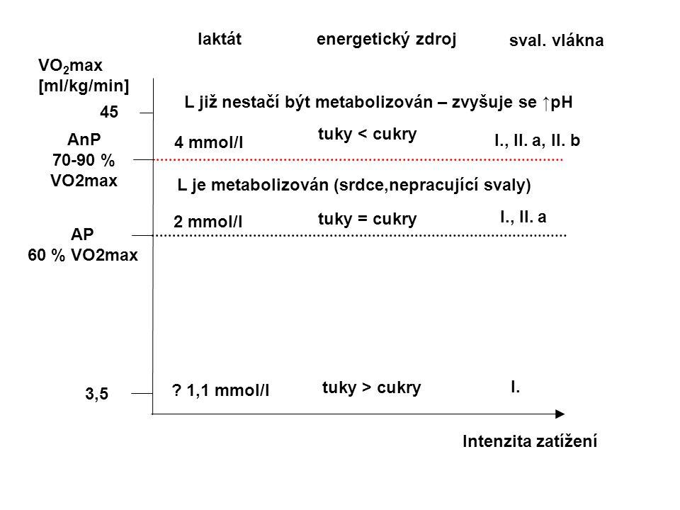 3,5 VO 2 max [ml/kg/min] 45 Intenzita zatížení AP 60 % VO2max AnP 70-90 % VO2max laktát energetický zdroj ? 1,1 mmol/l sval. vlákna 2 mmol/l 4 mmol/l