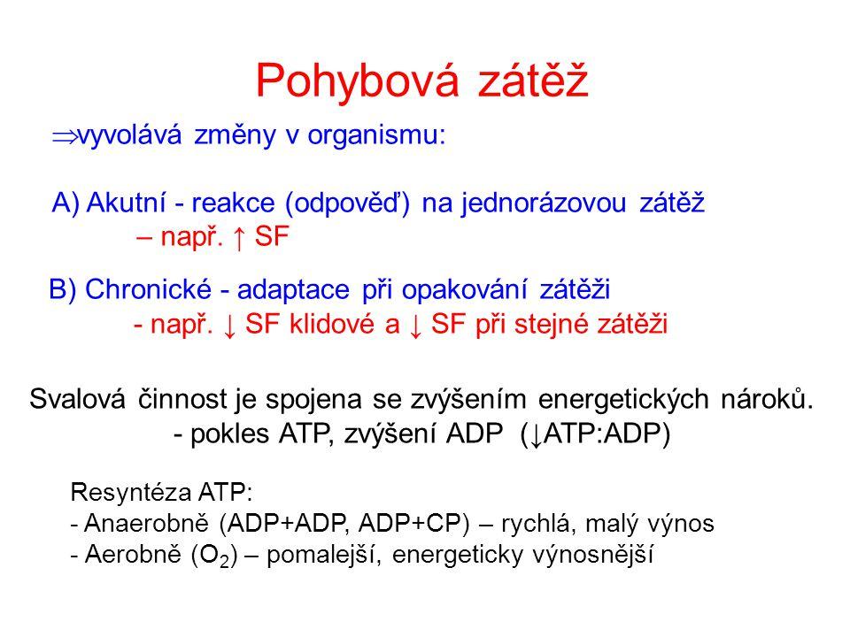 Pohybová zátěž Svalová činnost je spojena se zvýšením energetických nároků. - pokles ATP, zvýšení ADP (↓ATP:ADP)  vyvolává změny v organismu: A) Akut