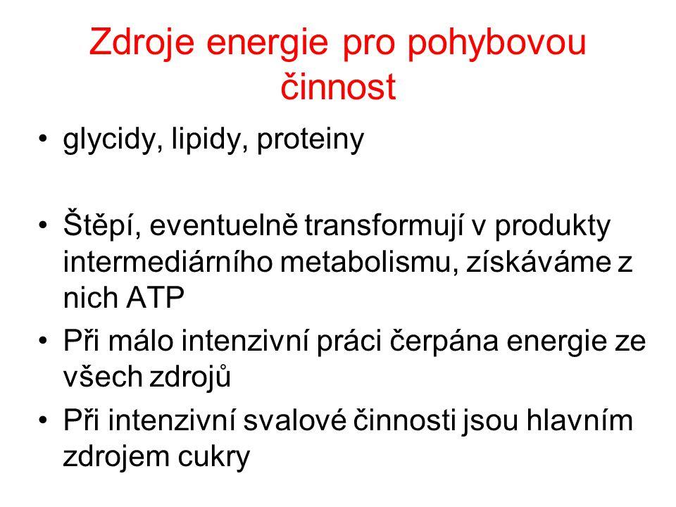 Zdroje energie pro pohybovou činnost glycidy, lipidy, proteiny Štěpí, eventuelně transformují v produkty intermediárního metabolismu, získáváme z nich