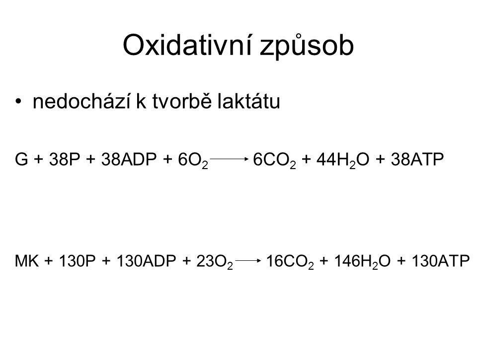 Oxidativní způsob nedochází k tvorbě laktátu G + 38P + 38ADP + 6O 2 6CO 2 + 44H 2 O + 38ATP MK + 130P + 130ADP + 23O 2 16CO 2 + 146H 2 O + 130ATP