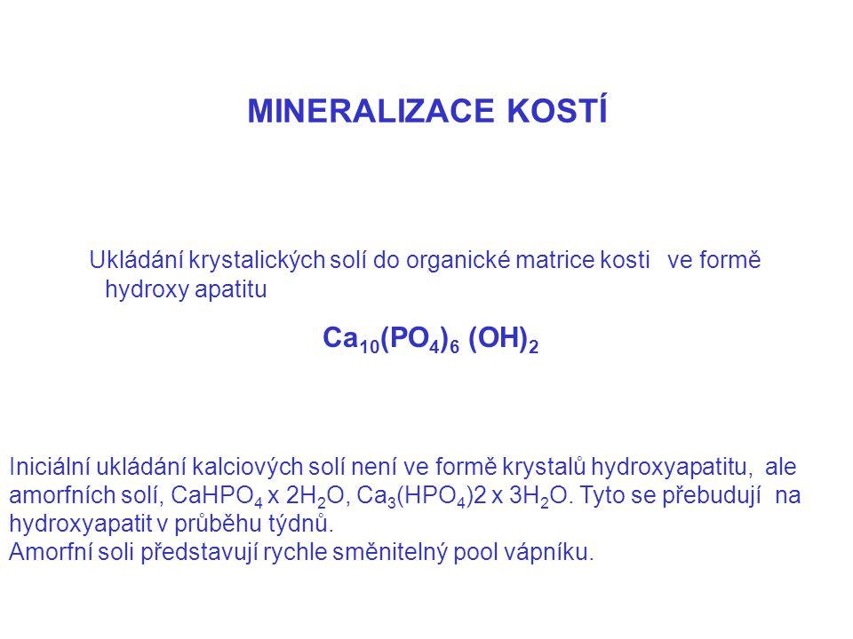 MINERALIZACE KOSTÍ Ukládání krystalických solí do organické matrice kosti ve formě hydroxy apatitu Ca 10 (PO 4 ) 6 (OH) 2 Iniciální ukládání kalciovýc
