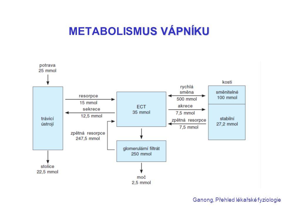 US VÁPNÍKU METABOLISMUS VÁPNÍKU Ganong, Přehled lékařské fyziologie