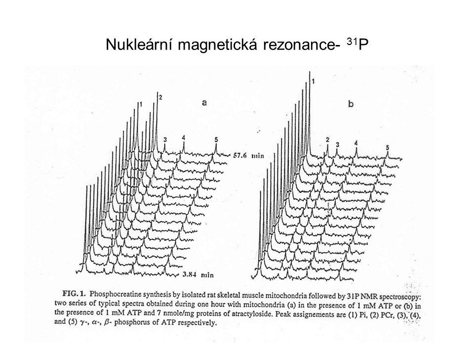 Nukleární magnetická rezonance- 31 P