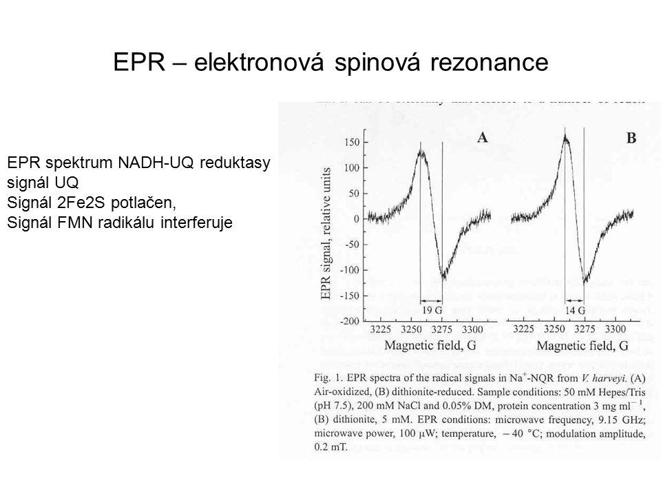 EPR spektrum NADH-UQ reduktasy signál UQ Signál 2Fe2S potlačen, Signál FMN radikálu interferuje