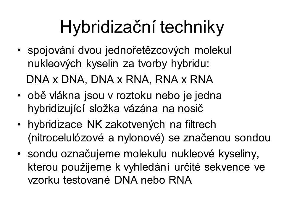 Hybridizační techniky spojování dvou jednořetězcových molekul nukleových kyselin za tvorby hybridu: DNA x DNA, DNA x RNA, RNA x RNA obě vlákna jsou v