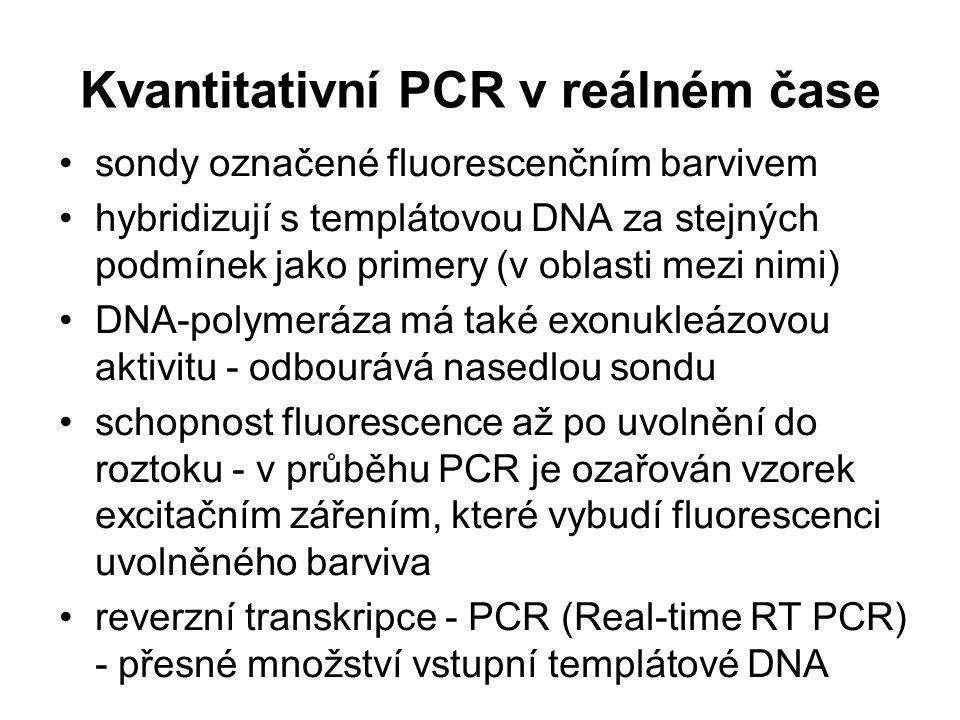 Kvantitativní PCR v reálném čase sondy označené fluorescenčním barvivem hybridizují s templátovou DNA za stejných podmínek jako primery (v oblasti mez