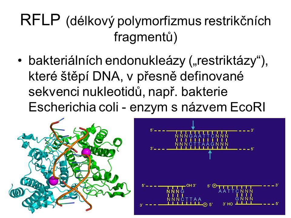 """RFLP (délkový polymorfizmus restrikčních fragmentů) bakteriálních endonukleázy (""""restriktázy""""), které štěpí DNA, v přesně definované sekvenci nukleoti"""